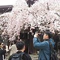 奈良 冰室神社