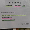 奈良-佐保川