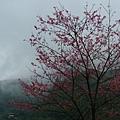 2007-02-21 011.jpg