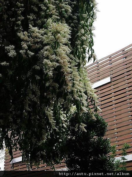2011-03-26溪頭 421_nEO_IMG.jpg