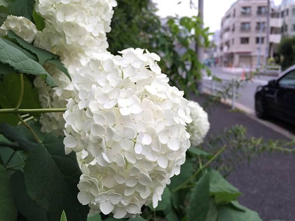 IMG_7850.JPG