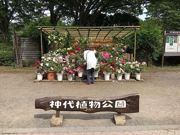 公園 深大寺