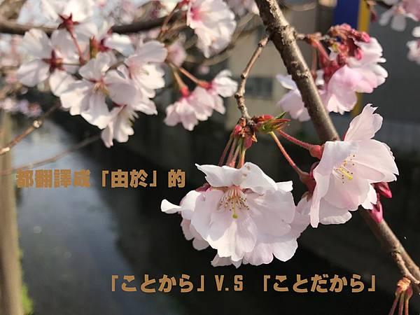 2017.04.15 TiN老師文法講座:都翻譯成「由於」的「ことから」V.S 「ことだから」(N2).jpg