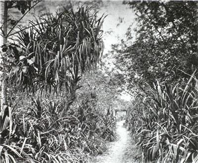 台灣府附近的鄉間小路