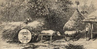 原住民所使用的牛車