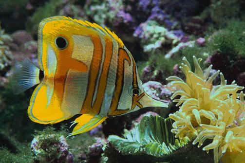 FishFuck.jpg