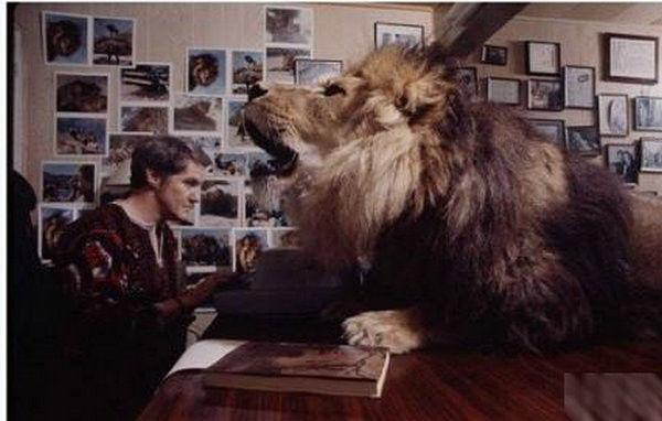 寵物獅.jpg