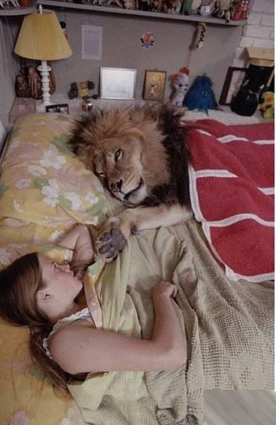 寵物獅 (4).jpg