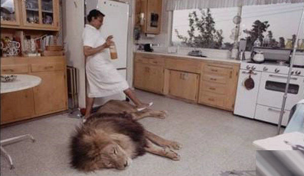寵物獅 (7).jpg