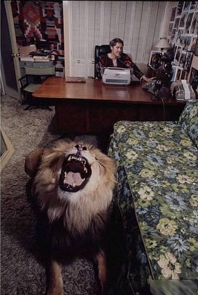 寵物獅 (6).jpg