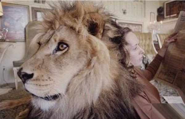 寵物獅 (12).jpg