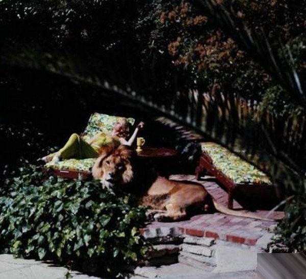 寵物獅 (14).jpg