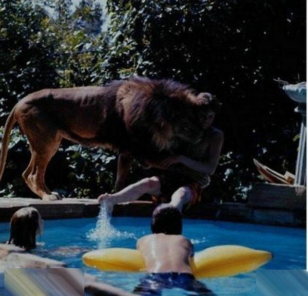 寵物獅 (18).jpg