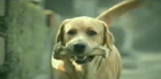 狗廣告Bridgestone1.jpg