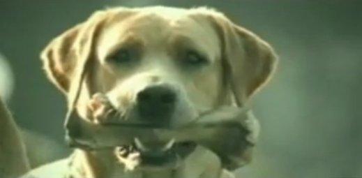 狗廣告Bridgestone5.jpg