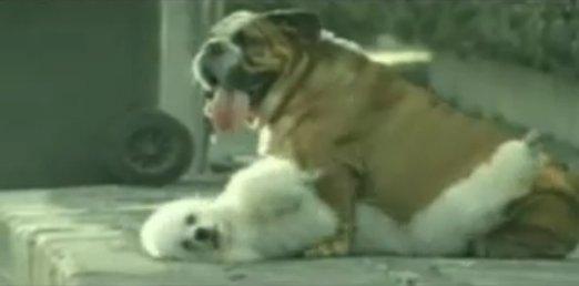 狗廣告Bridgestone4.jpg