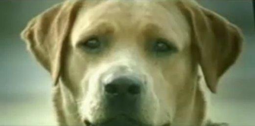 狗廣告Bridgestone7.jpg