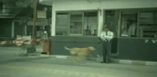 狗廣告Bridgestone11.jpg