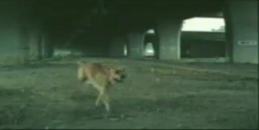 狗廣告Bridgestone13.jpg