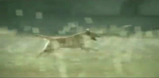 狗廣告Bridgestone12.jpg
