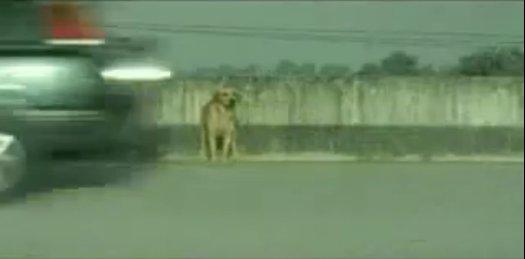 狗廣告Bridgestone16.jpg