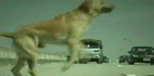 狗廣告Bridgestone20.jpg