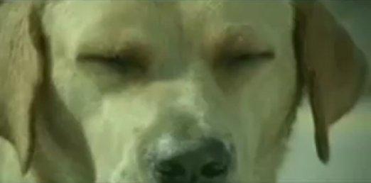 狗廣告Bridgestone19.jpg