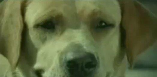 狗廣告Bridgestone23.jpg