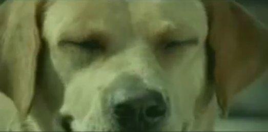 狗廣告Bridgestone24.jpg
