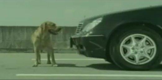 狗廣告Bridgestone25.jpg