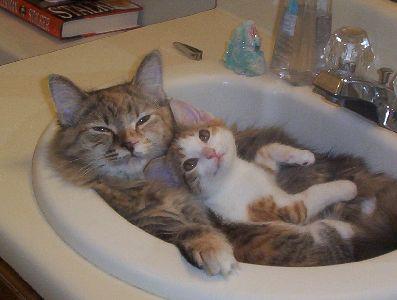 雙貓枕頭.jpg