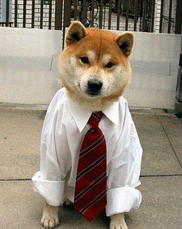 訓練有素的狗