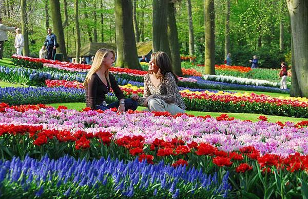 荷蘭庫肯霍夫花園與花卉市場