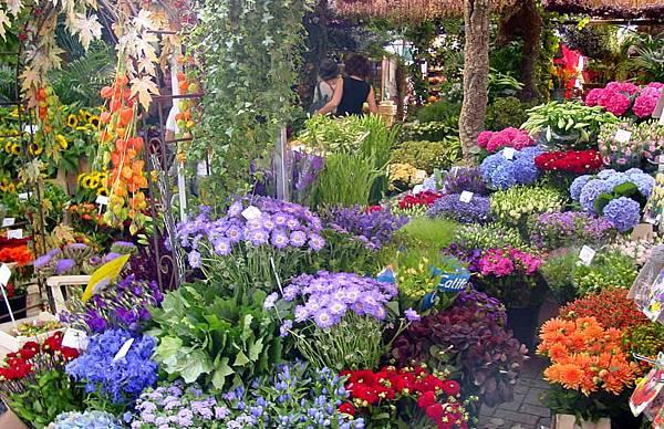 荷蘭庫肯霍夫花園與花卉市場 (2)