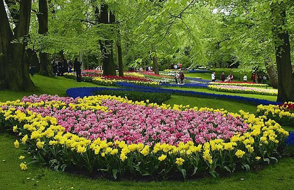 荷蘭庫肯霍夫花園與花卉市場 (5)