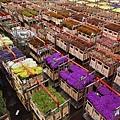 荷蘭庫肯霍夫花園與花卉市場 (6)