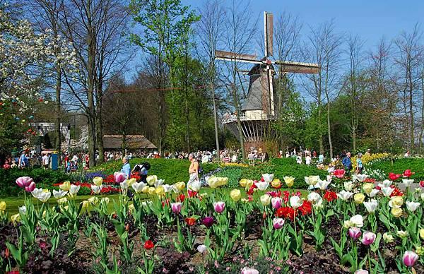 荷蘭庫肯霍夫花園與花卉市場 (9)