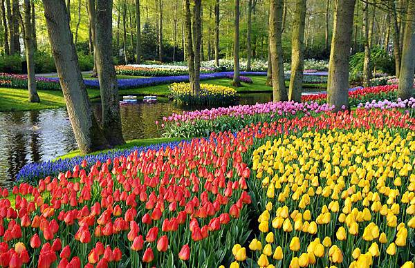 荷蘭庫肯霍夫花園與花卉市場 (10)