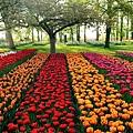 荷蘭庫肯霍夫花園與花卉市場 (12)