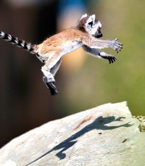 飛猴.jpg