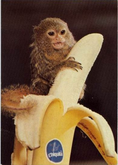 猴1.jpg