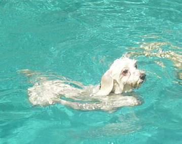 See.  I can swim!