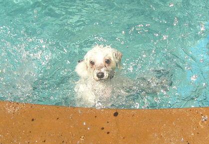 Jovi's Swim