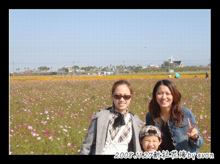 20081127新社花海.JPG