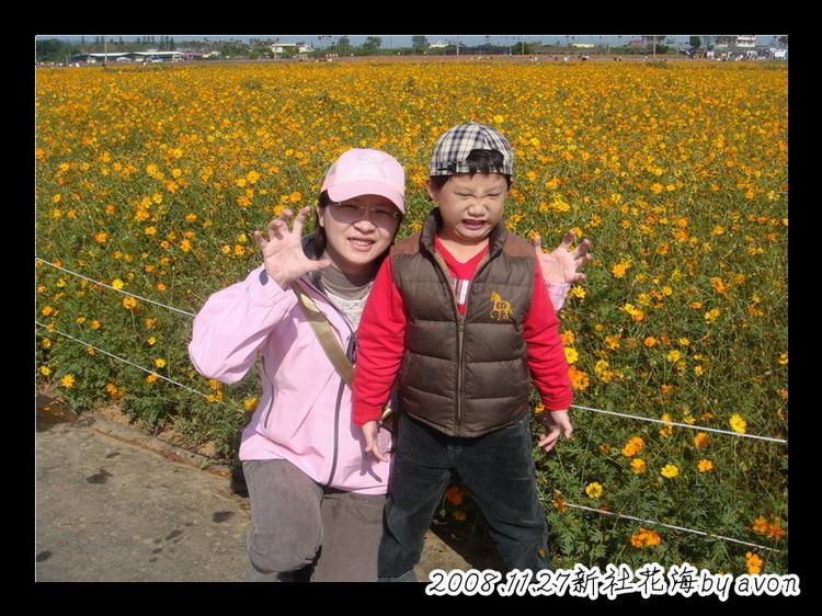 20081127新社花海 (4).JPG