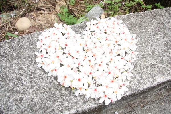 2010四月飛雪桐花祭
