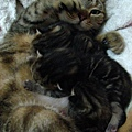 還是一貓抱一個