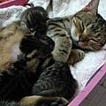 媽媽又要睡著了