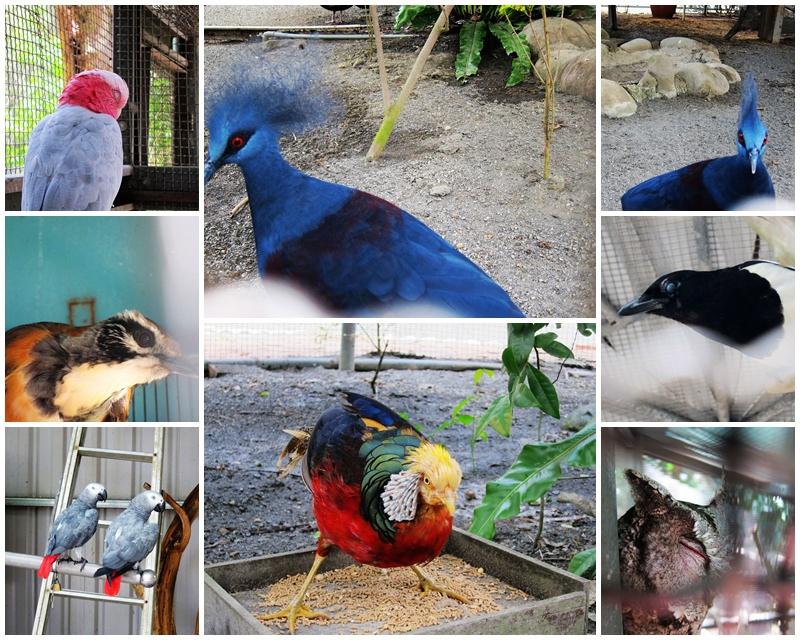 27.鳥兒.jpg