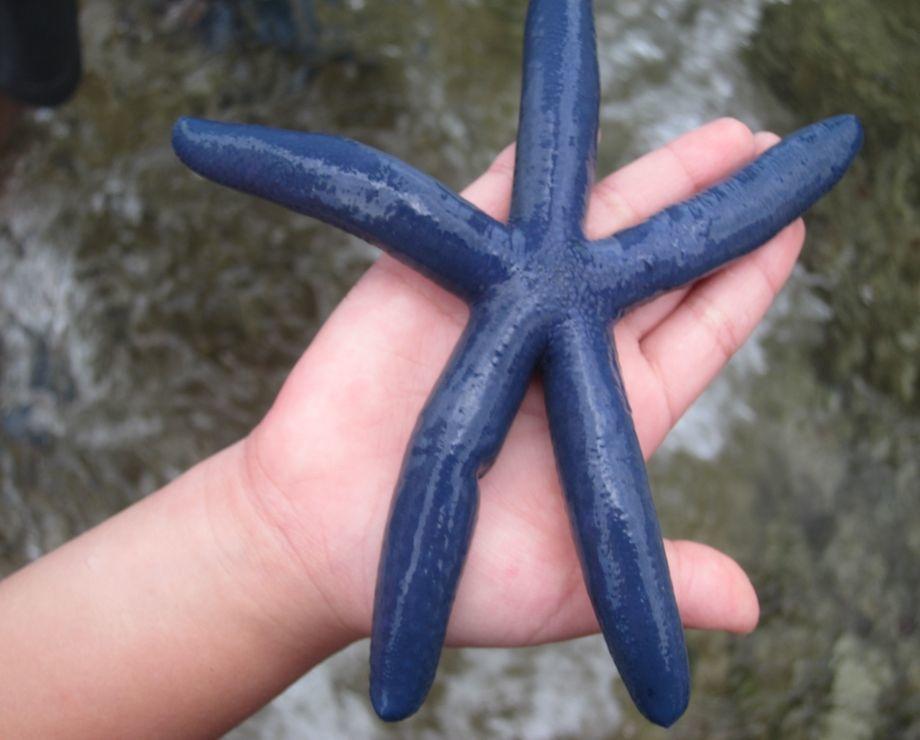 00.藍海星.jpg